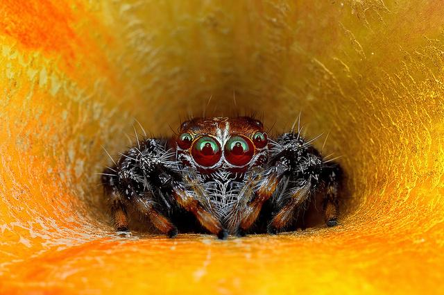 spider, best spider photo, amazing spider photo, spider photo, spider photo malaysia, spider photo by Jimmy Kong