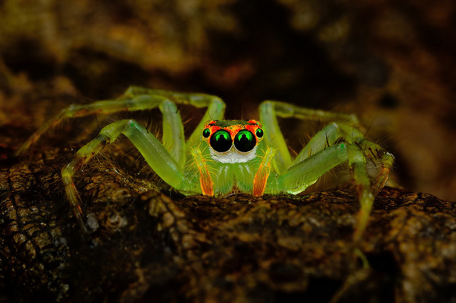 spider photo, alien spider photo, spider photo by Jimmy Kong, fascinating spider, amazing spider photo, best spider photo, january 2014