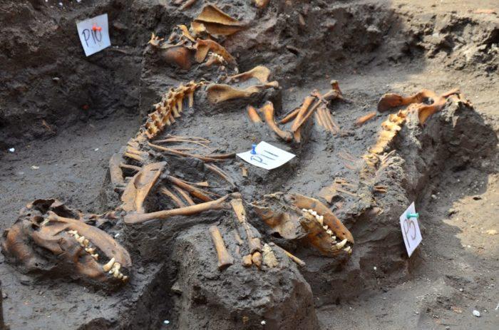 dog cemetery, dog mexico 2014, dog burial site mexico 2014, Dog found in Mexico City 2014, aztec dog cemetery, DESCUBREN INSÓLITO ENTIERRO DE PERROS PREHISPÁNICOS, aztec dog burial site, dog burial site mexico city, mexico city dog excavation site 2014, discovery of dog cemetary in Mexico City in February 2014, Dog cemetary unearthed in Mexico City in February 2014, Especialistas del INAH encontraron los restos de 12 canes durante tareas de salvamento arqueológico realizadas en un predio de la Avenida Azcapotzalco, Los animales debieron ser colocados en un mismo momento hace más de 500 años, entre 1350 y 1520 d.C., durante el apogeo mexica de la Cuenca cano,  restos de 12 canes e mexico, mexico  restos de 12 canes  february 2014