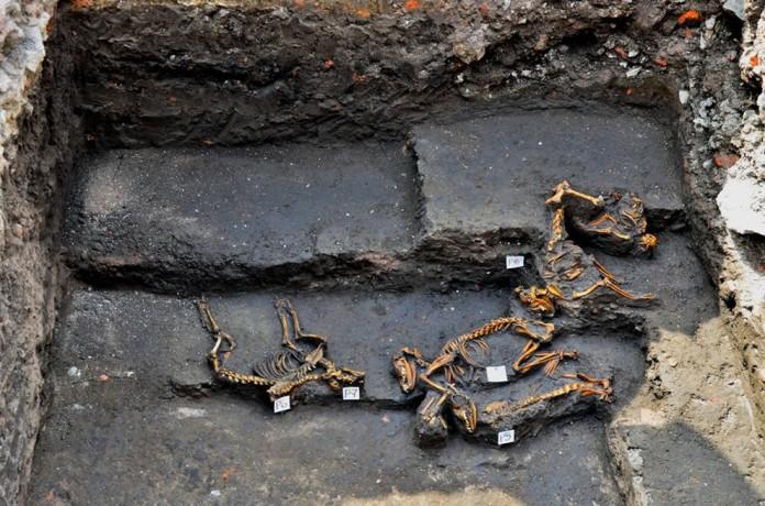aztec dog cemetary, DESCUBREN INSÓLITO ENTIERRO DE PERROS PREHISPÁNICOS, aztec dog burial site, dog burial site mexico city, mexico city dog excavation site 2014, discovery of dog cemetary in Mexico City in February 2014, Dog cemetary unearthed in Mexico City in February 2014, Especialistas del INAH encontraron los restos de 12 canes durante tareas de salvamento arqueológico realizadas en un predio de la Avenida Azcapotzalco, Los animales debieron ser colocados en un mismo momento hace más de 500 años, entre 1350 y 1520 d.C., durante el apogeo mexica de la Cuenca cano, restos de 12 canes e mexico, mexico restos de 12 canes february 2014