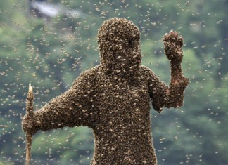 killer bees, africanized honeybees, africanized honeybees aka killer bees, killer bees or africanized honeybees, Wang Dalin attracting 26.86kg of bees onto his body, covered only by a pair of shorts and swimming goggles