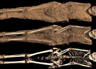 mummy, mummy discovery, christian tattooed mummy sudan, Ancient Lives: New Discoveries, mummy tagged with michael name in Sudan, Sudan christian mummy found, Christian tattooed mummy Sudan, christian mummy found in Sudan, Christian tattooed mummy found in a cemetery along the Nile in Sudan. CT scan, Ancient Lives: New Discoveries exhibition at NMH, Ancient Lives: New Discoveries exhibition, Ancient Lives: New Discoveries mummified exhibition