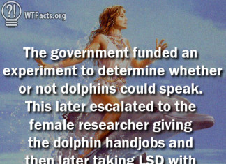 Dolphins talk have sex and LSD with human, The US government funded research in 1965 to see if dolphins could speak. This later escalated to the female researcher giving the dolphin hand jobs and then later taking LSD with the dolphin., talking dolphin, wtf facts, Dolphins talk have sex and LSD with human, strange facts, weird facts, dolphin lsd, dolphin handjobs, dolphin research, dolphin human communication, dolphin research communication, Dolphins talk, take LSD and get handjobs from US scientists, Can Dolphins Talk? A 1965 Experiment Ended Giving the Dolphin Hand Jobs and LSD