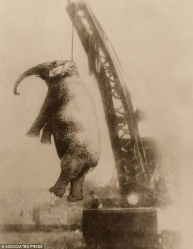 'Murderous Mary' the elephant, 'Murderous Mary' the elephant strange story and wtf photo, wtf photo of hung elephant, terrifying photo of hung elephant in Tennessee in 1916, On September 13 1916 the town of Erwin Tennessee hung 'Murderous Mary' the elephant after she mauled one of her keepers to death the day before, strange, weird, baffling photo, wtf photo of hanged elephant, hanged elephant terrifying photo, mysterious story of why murderous mary was hanged in Tennessee in 1916, Strange Story: The elephant murderous mary was hanged in Tennessee in 1916