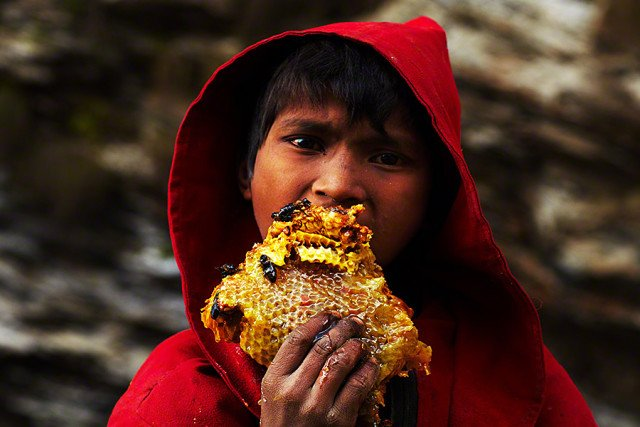 why eating honey, eat honey, honey is good for you, honey hunter in Nepal, Nepal honey hunter, honey hunter himalay photo, You should eat honey to become a man!. Photo: Andrew Newey, terrifying honey hunting in Nepal