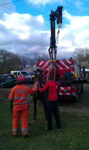 horse sinkhole Bashurst Hill March 2014, Amazing machines wereused to take the trapped horse out of the deep sinkhole near Horsham, UK , horse struck in sinkhole for hours in UK, uk horse falls into sinkhole and is delivered after hours, horse uk sinkhole march 2014, horse falls into sinkhole in uk march 2014, Amazing machines wereused to take the trapped horse out of the deep sinkhole near Horsham, UK