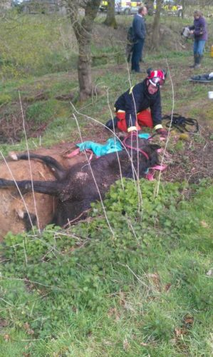 uk sinkhole march 2014, horse in sinkhole uk march 2014, horse sinkhole Horsham UK march 2014, horse swallowed by sinkhole in Horscham march 2014, horse sinkhole, horse sinkhole uk march 2014, horse sinkhole in Bashurst Hill near Horsham march 2014, Horsham March 2014, This horse was stuck for hours in this deep sinkhole in in Bashurst Hill near Horsham, UK on March 23 2014, horse sinkhole