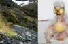 kea, kea image, kea photo, kea parrot, kea new Zealand, ugly animal babies, kea has the ugliest baby, ugliest animal babies around the world, world's ugliest baby animals, photo of ugly animal babies, kea babies and adult photo, Kea before and after: Keas parrots babies are abominable