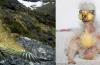 kea, kea image, kea photo, kea parrot, kea new Zealand, ugly animal babies, kea has the ugliest baby, ugliest animal babies around the world, world's ugliest baby animals, photo of ugly animal babies, kea babies and adult photo, Kea before and after: Keas parrots babies are abominable