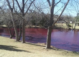 Mysterious phenomenon, water turns blood red in wichita pond, Mysterious phenomenon Pond in Wichita Kansas turns Blood Red (Feb 19, 2014), red tide in Wichita pond, why is water becoming red in my pond?, red tide in Wichita pond February 2014 video, red water in Wichita pond, wichita pond turns red, mysterious phenomenon: Wichita's water turns red, blood red water in Whichita Kansas, kansas blood water WIchita february 2014, strange phenomenon: blood red water in Wichita, Blood red pond in Wichita Kansas. Photo: Freddy Fernandez