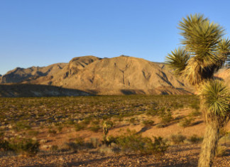 Deserts Found To Be Major Carbon Dioxide Sink, Research: Arid areas absorb unexpected amounts of carbon, desert CO2 sinks, major CO2 sinks, what are the major CO2 sinks, deserts are major CO2 sinks, Deserts are a Major Carbon Dioxide Sink, Deserts are a Major Carbon Dioxide Sink, Deserts Carbon Sequestration, Deserts Carbon Storage, Mojave Desert CO2, Deserts Co2 Deserts, Deserts Climate Change, Climate Change, Deserts, CO2 Sink, View of Mojave Desert with Joshua Tree, Virgin Mountains in background. By Getty Images