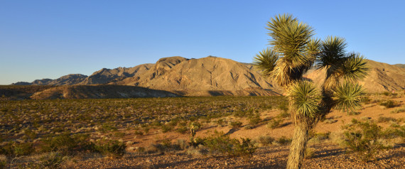 """deserts can serve as a """"sink"""" for significant levels of carbon dioxide, Deserts Found To Be Major Carbon Dioxide Sink, Research: Arid areas absorb unexpected amounts of carbon, desert CO2 sinks, major CO2 sinks, what are the major CO2 sinks, deserts are major CO2 sinks, Deserts are a Major Carbon Dioxide Sink, Deserts are a Major Carbon Dioxide Sink, Deserts Carbon Sequestration, Deserts Carbon Storage, Mojave Desert CO2, Deserts Co2 Deserts, Deserts Climate Change, Climate Change, Deserts, CO2 Sink, View of Mojave Desert with Joshua Tree, Virgin Mountains in background. By Getty Images"""