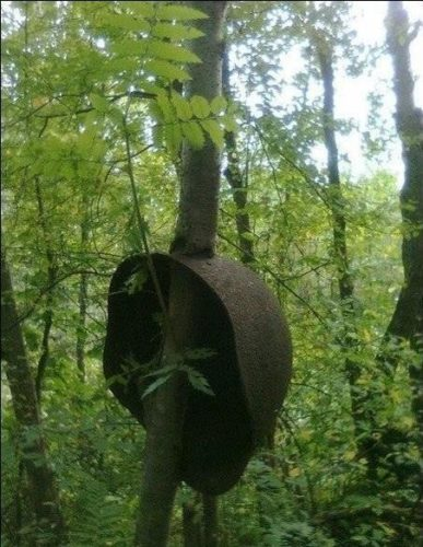 Soldier helmet stuck in a tree. Photo: Imgur, armed tree, arms in tree photo, photo of arms in tree, remnant of war photo, war in tree picture, photo of war, photo of war into tree trunks, War stuck in trees, remnants of war in trees photo, arms in trees photo, st.petersburg remnants of arms in tree photo, arms in tree trunks, remnants of war in tree trunks, arms inside tree trunks photo, War stuck in trees, remnants of war in trees, arms in trees, st.petersburg remnants of arms in tree, arms in tree trunks, remnants of war in tree trunks, arms inside tree trunks, An helmet in a tree trunk. Photo: Imgur, Grenade stuck in a tree. Photo: Imgur, the ents gif, ent gif, ents attack gif, gif featuring ents attack