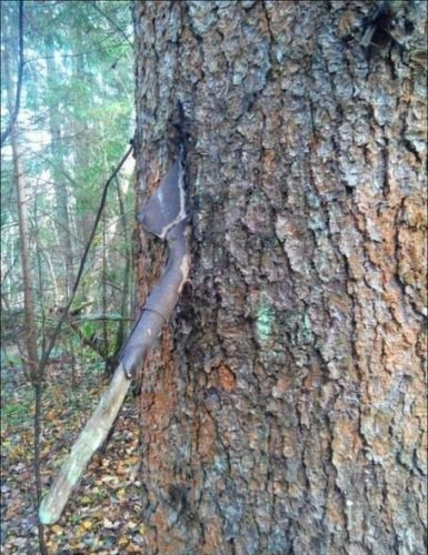 Paddle caught in tree. Photo: Imgur, armed tree, arms in tree photo, photo of arms in tree, remnant of war photo, war in tree picture, photo of war, photo of war into tree trunks, War stuck in trees, remnants of war in trees photo, arms in trees photo, st.petersburg remnants of arms in tree photo, arms in tree trunks, remnants of war in tree trunks, arms inside tree trunks photo, War stuck in trees, remnants of war in trees, arms in trees, st.petersburg remnants of arms in tree, arms in tree trunks, remnants of war in tree trunks, arms inside tree trunks, An helmet in a tree trunk. Photo: Imgur, Grenade stuck in a tree. Photo: Imgur, the ents gif, ent gif, ents attack gif, gif featuring ents attack