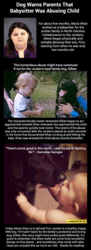 amazing stories involving dogs, how can dogs help humans, stories of human being saved by dogs, dog's are man's best firend example, why are dogs man's best friend, strange animal behavior, amazing stories: strange dog behavior saves kid from being abused, viral story: strange dog phenomenon, amazing stories: Dog warns parents that babysitter was abusing child, viral stories: Dog warns parents that babysitter was abusing child, strange dog stories: Dog warns parents that babysitter was abusing child, weird stories: Dog warns parents that babysitter was abusing child, Dog warns parents that babysitter was abusing child, dog dog saves baby from babysitter, This amazing story of a dog saving a baby from his babysitter was found on The Meta Picture, dog saves baby from babysitter