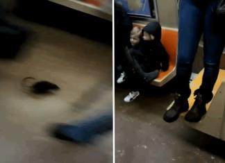 rat, nyc subway, rat in new york city subway video, large rat NYC subway, subway rat NY april 2014, large rat terrorizes New York City subway passengers (VIDEO) - April 2014
