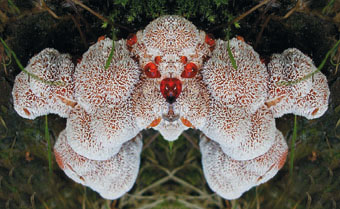 strange mushroom, magic mushroom, strange mushroom, Bill from Boule et Bill?, This mushroom looks like Bill from Boule et Bill, no? Photo: Alfred Adomat, Abortiporus biennis