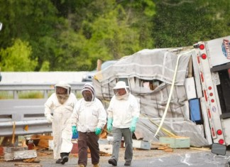 Millions of bees on the loose in Delaware after a truck overturns on I95.