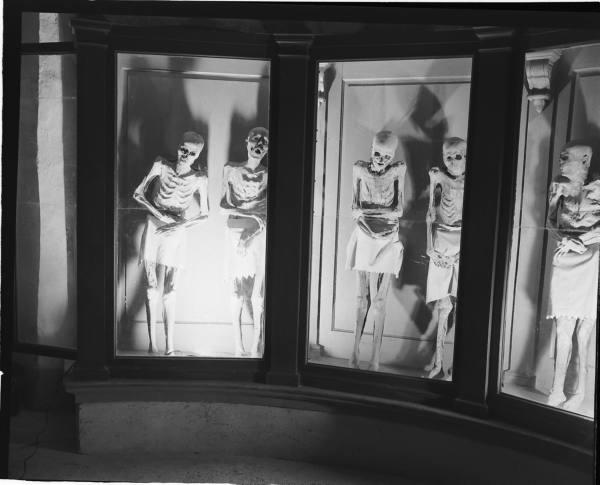 strange phenomenon: why do bodies buried under the Venzonea cathedral do not decompose?, mysterious phenomenon: Some skeletons of the Venzonea mummies in Italy, mysterious phenomenon: bodies do not decompose in Venzonea Italy, weird phenomenon: bodies buried in Venzonea do not decompose, decomposition of buried bodies under the Venzone cathedral do not decompose, THE VENZONEA mummies, Some skeletons of the Venzonea mummies in Italy. Photo: Unautre.com