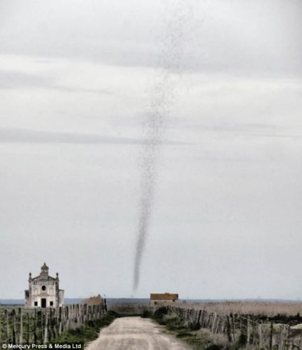 strange animal behavior: locust tornado may 2014, strange animal behavior: locust tornado (Bugnado) may 2014, strange insect behavior: bugnado or locust twister near lisbon may 2014, Bugnado in Lisbon may 2014, Is this a real tornado? No it is alive and made out of red locusts... A living bugnado! strange phenomenon: locust create huge column looking like a tornado near Lisbon may 2014, tornado of locust lisbon may 2014, locust tornado may 2014, lisbon locust tornado may 2014, strange phenomenon: locust tornado portugal may 2014, locust tornado lisbon portugal may 2014, strange animal behavior: locust tornado may 2014,