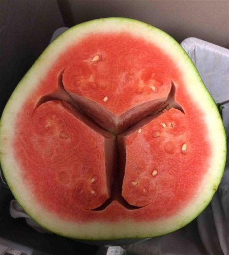 hollow hearted watermelon, weird hollow form in watermelon, strange watermelon, weird cracks in watermelon, why do cracks form in my watermelon, watermelon is cut in three parts by weird hollow form, what is a hollow heart watermelon, hollow heart watermelon photo