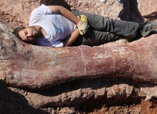 paleontology news, Fossilised bones of a dinosaur believed to be the largest creature ever to walk the Earth have been unearthed in Argentina, paleontology news: largest dinosaur ever discovered, largest dinosaur ever discovered in Argentina, where is the largest dinosaur ever discovered, fossil bones of largest dinosaur ever discovered unearthed in Argentina, largest dinosaur ever discovered unearthed in Argentina may 2014, Largest dinosaur ever discovered found in Argentina may 2014, The femur of this gigantic dinosaur found in Argentina and a member of the crew lying beside. Amazing! Photo: MEF, biggest dinosaur ever discovered unearthed in Argentina, Argentina largest dinosaur ever discovered, Argentina largest dinosaur ever discovered video, video of Argentina largest dinosaur ever discovered