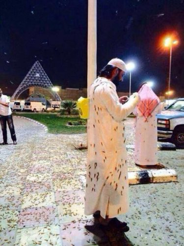 Locust plague in Saudi Arabia - May 15 2014, Real images as taken from the Bible or a horror movie, Locust plague in Saudi Arabia - May 15 2014. Photo: Alerta Roja Noticias