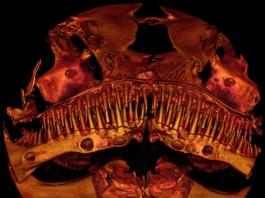 new type of catfish is monstruous, strangest fish on earth, weirdest fish on earth, mysterious catfish on earth, strangest fish research, 'Alien' Catfish Baffles Scientists, mysterious alien catfish, mysterious catfish, animal discovery that baffled scientitst, fish discovery that baffled scientitst, mysterious Kryptoglanis shajii, terrifying catfish skeleton baffles scientists, new terrifying catfish, monster catfish from India, alien catfish india, new species of alien catfish,