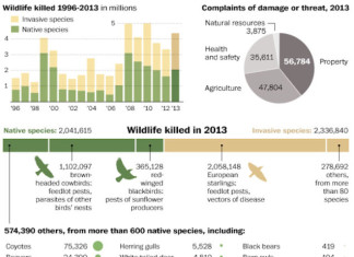 infographics: wild animals exterminated by the federal government, us government kills wild animals infographics, us wild animal mass die-off, us govenment animal mass die-off, 4 Million Animals killed by USDA in 2013 without reason, 4 million animals have been killed without reason by USDA in 2013... And that's a hell of a lot! Infographic: Washington Post, 4 million animals have been killed without reason by USDA in 2013... And that's a hell of a lot! Infographic: Washington Post, USDA's Wildlife Services killed 4 million animals in 2013; seen as an overstep by some, governments kill of 4 million animals seen as an overstep, 4 mio animals killed by us government, us government kills 4 millions animals in 2013