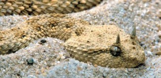 deadly animal plague, plague of deadly animals in Iraq, venemous snakes in Iraq, venemous snake plague iraq, Iraq snake plague, snake plague in iraq, iraq rivers drought, drought in iraq, Back in 2009 drought triggered a terrifying and deadly snake plague in Iraq. Photo: The independent, AS IRAQ RUNS DRY A PLAGUE OF SNAKES IS UNLEASHED, iraq snake plague, iraq drought and snake plague, desertification in iraq, agriculture in Iraq and desertification, consequences of drought in Iraq, Iraq animal plague