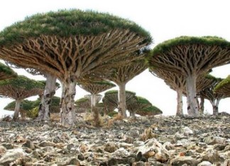 Socotra island, Socotra island strange, amazing Socotra island, strange tales Socotra island, the mysterious Socotra island, Ancient folklore: Fables and tales explaining the formation of geological oddity, Ancient folklore: Fables and tales explaining the formation of Socotra island