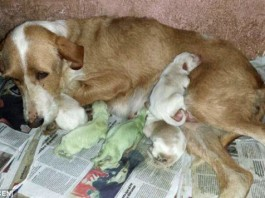 green puppies, strange green puppies, animal oddity: green puppies, weird animal phenomenon: green puppies spain june 2014 video, video green baby dogs june 2014, green puppies in Spain - June 2014, These two green puppies were born in Spain... And their color baffles scientist. Photo: El Dinamo