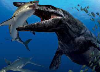 mystery creature kills and eats great white shark, mystery deep-sea creature ate great white shark, great white shark eaten by maysterious deep-sea creature, what animal eats and kills great white sharks, strange creature eats and kills great white shark, Is this the mysterious creature that dragged and ate a giant white shark in the deep ocean? Photo: National Geographic