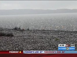 Yellowstone Hail Storm: Ground Erupts As Invisible Lightning Strikes Tree, This video presents the amazing moment the ground erupted as an invisible but loud lightning struck a tree in the vicinity of campers at Yellowstone in June 2014. Photo: kmtv.com, ground eruption after lightning strike, yellowstone ground eruption after lightning strike, loud boom and ground eruption after lightning strike at yellowstone, lightning, lightning strike video, amazing moment, amazing close call with nature, amazing lightning close call video, best lightning video june 2014, Camper Catches Lightning Strike On Camera, hailstorm and lightning strike at yellowstone june 2014, extreme weather yellowstone: hail storm and lightning yellowstone june 2014, severe weather phenomenon: gound erupts after lightning strike during hail storm at Yellowstone june 2014 video