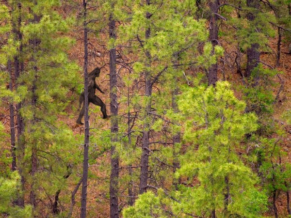sasquatch, bigfoot, abominable snowmen, Bigfoot: First DNA Analyses Of Sasquatch, Bigfoot: First DNA Analyses Of Sasquatch published, Bigfoot: First DNA Analyses Of Sasquatch, First DNA Analyses Of Sasquatch july 2014, july 2014: first dna analyses of bigfoot july 2014, Bigfoot DNA Analyses, bigfoot dna, abominable snowmen dna, dna analysis sasquatch, dna analyses of bigfoot, dna bigfoot PNAS, dna sasquatch scientific study, dna sasquatch, first dna analysis of bigfoot, first dna analysis for sasquatch, first dna analysis for abominable snowmen, new dna analysis bigfoot, first dna analysis of bigfoot, Bigfoot is not wwhat you think it is as shown by this DNA analysis, dna study, dna of bigfoot, dna of sasquatch, dna of abominable snowman, amazing finds, These anomalous primate are called Bigfoot, Sasquatch, yeti or  abominable snowmen. But their dna shows they are normal species, dna analysis bigfoot, bigfoot dna analysis