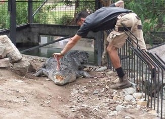 Handler at Shoalhaven Zoo, Australia, was attacked by crocodile during feeding show on July 7, 2014. Photo: Daily Telegraph, NSFW Video: Australian Zoo Handler Dragged Into Water By Crocodile, NSFW Video: Australian Zoo Handler Dragged Into Water By Crocodile at Shoalhaven Zoo in Australia july 2014 video, Crocodile, Crocodile attack, Crocodile attack video, Crocodile attack australia video july 2014,Crocodile attack Shoalhaven Zoo, Crocodile attack Shoalhaven Zoo australia, Crocodile attack Shoalhaven Zoo australia video, Crocodile attack Shoalhaven Zoo australia july 2014 video, Australian Zoo Handler Dragged Into Water by Crocodile at Shoalhaven Zoo on July 7 2014, NSFW Video: Australian Zoo Handler Dragged Into Water By Crocodile at Shoalhaven Zoo in Australia during feeding show on July 7 2014.