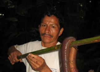 earthworm, giant earthworm, giant earthworm photo, giant earthworm ecuador, giant earthworm photo july 2014, giant earthworm ecuador photo july 2014, giant earthworm picture, giant earthworm video, This giant earthworm was found in the wet soil of Sumaco Volcano in Ecuador. Photo: hoppy4840