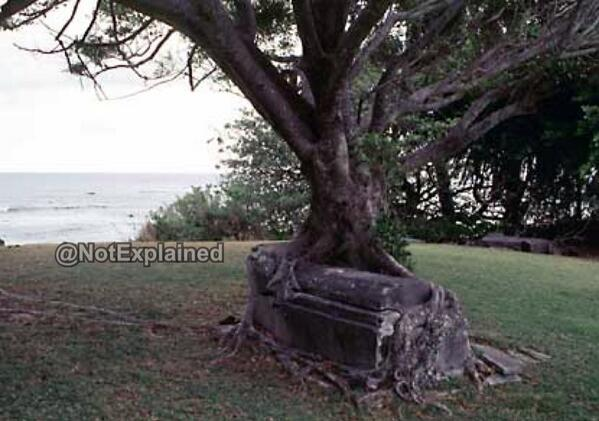 tree grave hawaii, tree engulfs grave photo, photo tree grave hawaii, mystery palces: tree grave hawaii, tree grave hawaii, zombie tree engulfs grave hawaii, tree tomb hawaii national park, mysterious parts of tree grave hawaii, grave engulfed by tree tree grave hawaii, mysterious place: tree grave hawaii, strange parts of tree grave hawaii you will never visit, This zombie tree feeds from a grave in Kalaupapa National Park in Hawaii. Photo: Unexplained picture, mystery places, mystery, weird place, visit strange places, Kalaupapa, hawaii, zombie tree, tree engulfs grave photo