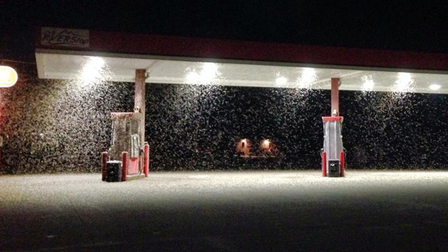 mayfly hatch mississippi valley july 2014, mayfly plague mississippi valley july 2014 photo and video, You need some gas? Wait your turn, mayflies are fueling up in La Crosse wisconsin during the last mayfly hatch. Photo: 8000 news, mayfly la crosse photo july 2014, mayfly hatch la crosse july 2014 photo, mayflay plague la crosse july 2014 video, Mayflies hatch in La Crosse, mayfly swarm weather radar la crosse july 2014, insect swarm radar july 2014, insect swarm shows up on weather radar, The flying mayfly swarm was so dense it showed up on weather radar of La Crosse, WIsconsin. Photo: News 8000, mayfly plague la crosse july 2014, mayfly invasion july 2014, us mayfly plague la crosse wisconsin july 2014 video, amyfly so dense that appear on weather radar july 2014 la crosse, mayfly invasion la crosse wisconsin july 2014, mayfly hatch la crosse july 2014, How do you get to your money: Mayfly swarm covers ATM at La Crosse Wisconsin on July 20 2014. Photo:  News 8000, mayfly hatch mississippi valley july 2014, mayfly plague mississippi valley july 2014 photo and video, You need some gas? Wait your turn, mayflies are fueling up in La Crosse wisconsin during the last mayfly hatch. Photo: 8000 news