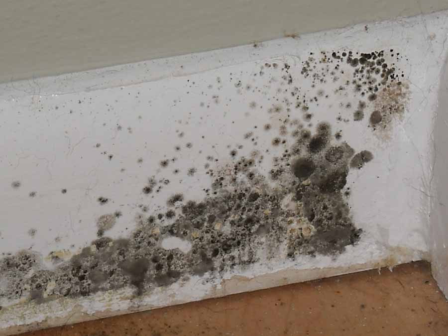Black Mold, Black Mold plague, Black Mold warren, Black Mold michigan, Black Mold photo, Black Mold plague in warren michigan after flooding, Black Mold plague warren michigan, Three weeks after the historical floods in Warren, Michigan, a black  mold plague is threatening residents. Photo: Wikipedia