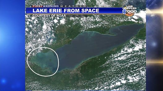 toxic water lake erie view from space, algae bloom toxic water toledo space photo, The algae bloom, viewed from space, responsible for toxic drinking water in Toledo, Ohio on August 2 2014. Photo: NOAA
