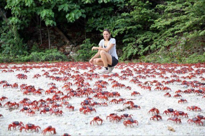 migration de crabe sur l'île Christmas photo, la migration de crabe l'image sur l'île Christmas, les migrations de crabe épatant sur l'île Christmas, les migrations de crabe sur l'île Christmas