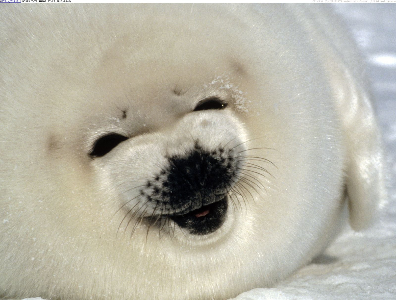 Image Gallery sealpup