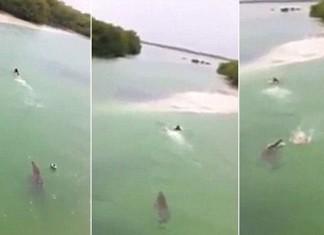 crocodile, man chased by crocodile, crocodile chases man in Mexico, crocodile chases swimmer in mexico video, video of giant crocodile chasing swimmer in mexico, The terrifying moment a giant crocodile chases a swimmer in Sian Ka'an, Mexico. Video: Youtube