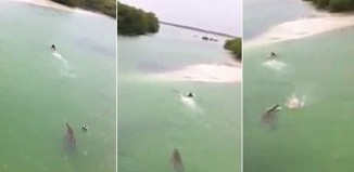 crocodile, man chased by crocodile, crocodile chases man in Mexico, crocodile chases swimmer in mexico video, video of giant crocodile chasing swimmer in mexico, The terrifying moment a giant crocodile chases a swimmer in Sian Ka'an, Mexico. Video: Youtube