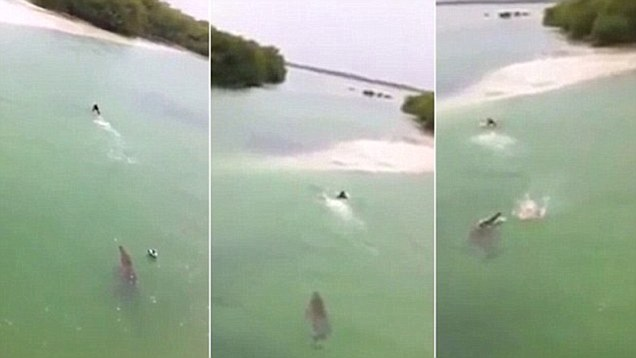Crocodile chases swimming tourist in Mexico, crocodile, man chased by crocodile, crocodile chases man in Mexico, crocodile chases swimmer in mexico video, video of giant crocodile chasing swimmer in mexico, The terrifying moment a giant crocodile chases a swimmer  in Sian Ka'an, Mexico. Video: Youtube, crocodile, crocodile attack, mexico, video, terrifying moment, terrifying phenomena