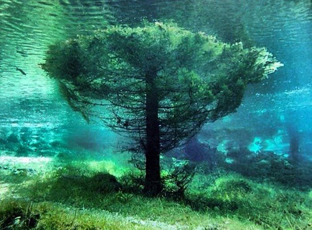 Mystery Places On Earth: Discover The Underwater Park At Grüner See (Green Lake) , Grüner See, Gruener See, Green Lake, Grüner See photo, Grüner See video, underwater park at grüner see, submerged park at grüner see, dive at Green lake, discover underwater park at Grüner see, green lake underwater park, You do not expect what you will discover under the Grüner See! A submerged park., From April to July, the Tragöß park is submerged by the Grüner See (Green Lake) in Austria.