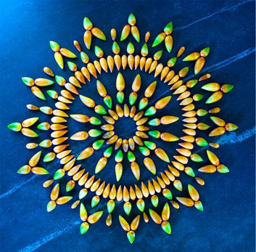 Mandala, danmala, Mandala danmala, madala flowers and fruits, Mandala danmala by Kathy Klein, Mandala danmala by Kathy Klein