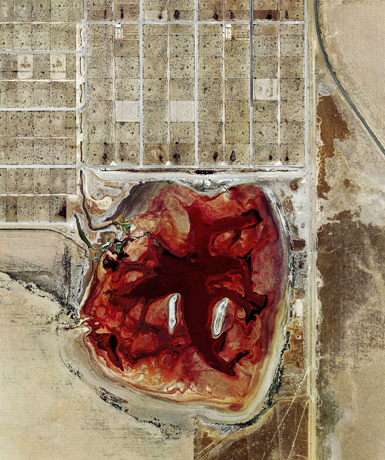 Mystery blood pool at industrial beef farm, blood pool at Coronado Feeders, red-blood lagoon at industrial beef farm, red lagoon at beef farm, why is waste lagoon blood-red at beef farm, Could anybody enlighten me and tell me wtf is this blood pool at Coronado Feeders, a Texas industrial beef farm in Delhart? Mystery debunked!, Why is this waste lagoon at Coronado Feeders, Delhart, TX, an industrial beef farm blood-red?