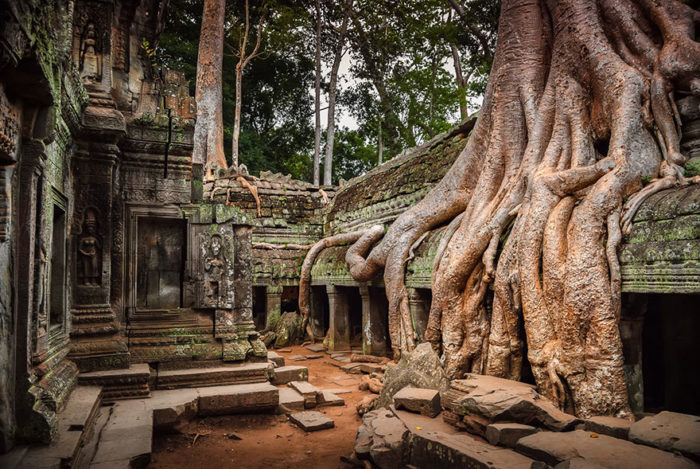 trees in angkor, jungle on angkor temple, anchor temple jungle, Angkor in Cambodia, , nature reclaiming abandoned places, nature abandonned places